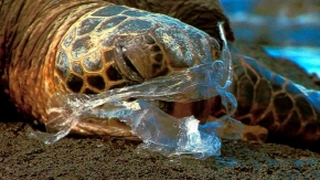 Let's Hope We Don't Have to Pull a Straw Out of a Turtle's Nose Again: Plastic as an Externality